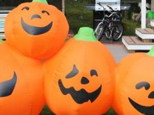 pumpkins-960x300_c